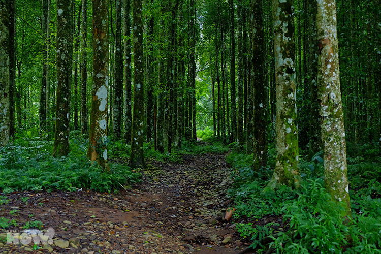 Bedugul Forests