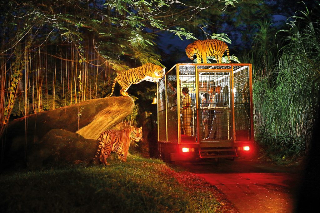 Night Safari (2)