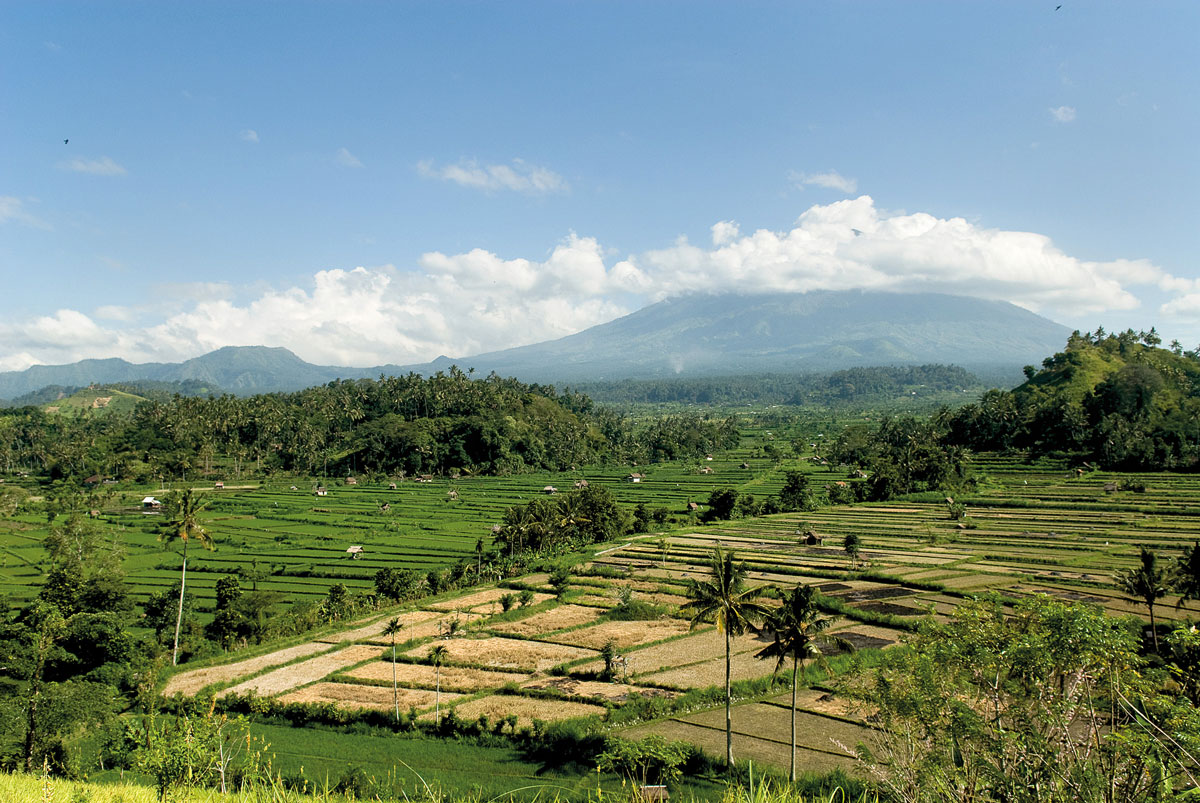 Mt Agung and Rice Field