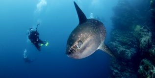 diving-around-island-bali-manta-rays