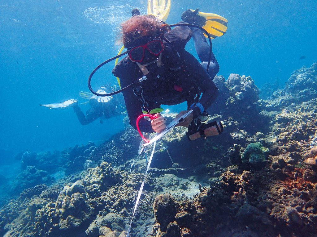 Theme - Coastal Communities - Reef Check Indonesia - coral monitoring