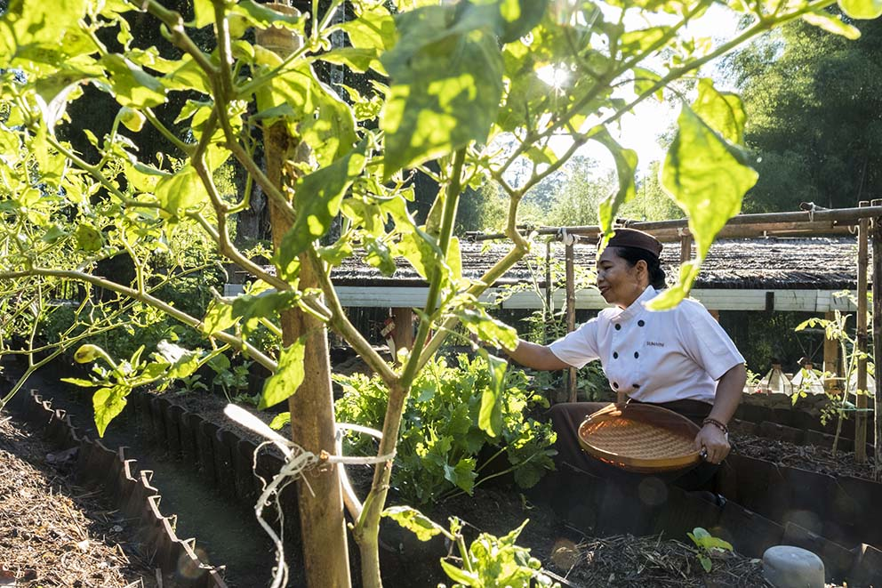 Alila Ubud_Chef in the Organic Garden