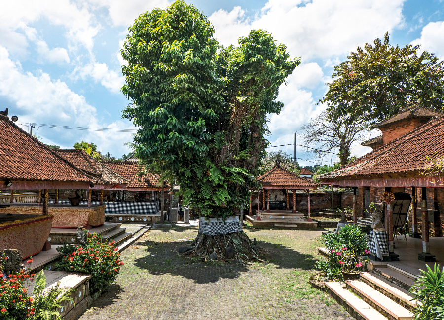Puri Anyar's Jabah Tengah, with a 300 year old cempaka tree at its centre
