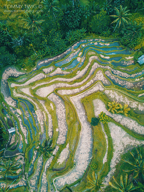 Tegallalang Rice fields by Tommy Twig