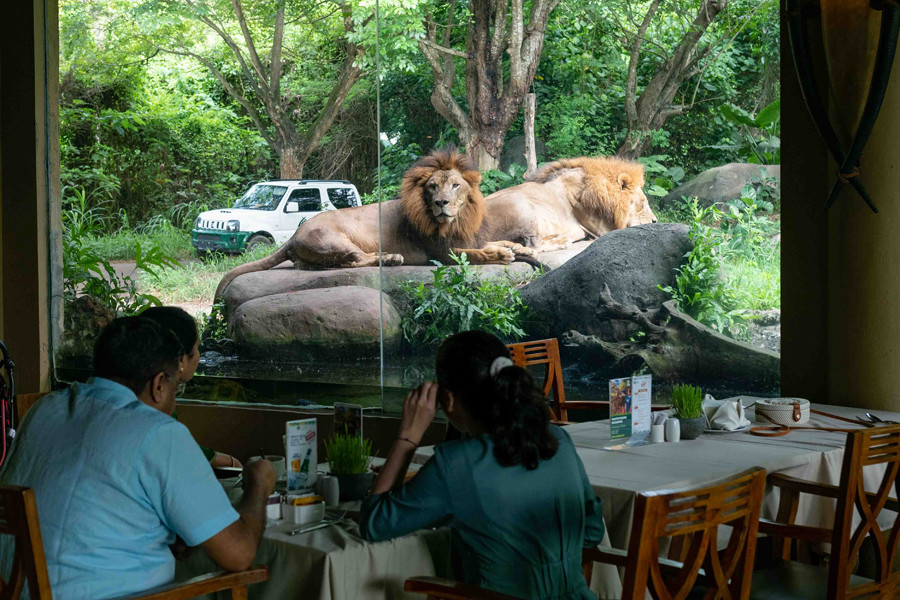 Bali Safari Breakfast with Lions 14