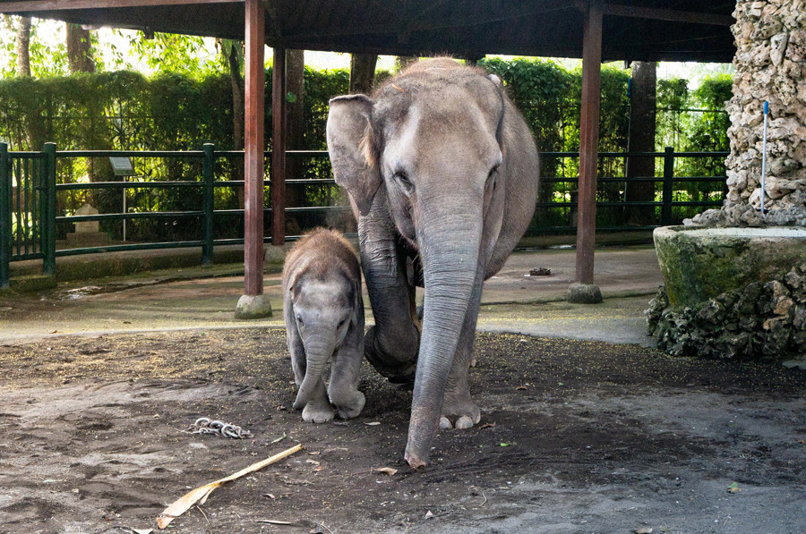 Bali for Kids - Mason Elephant Park