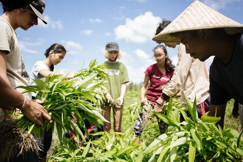From the Ground Up: Regenerating Bali's Agriculture the Astungkara Way